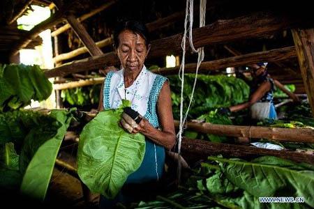 Sản xuất xì gà tại Cuba